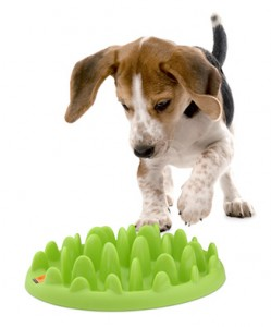 green_mini_pack_with_dog